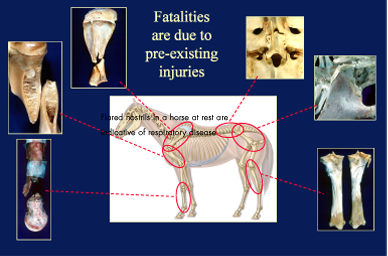 Photo: Catastrophic Injuries in Racehorses